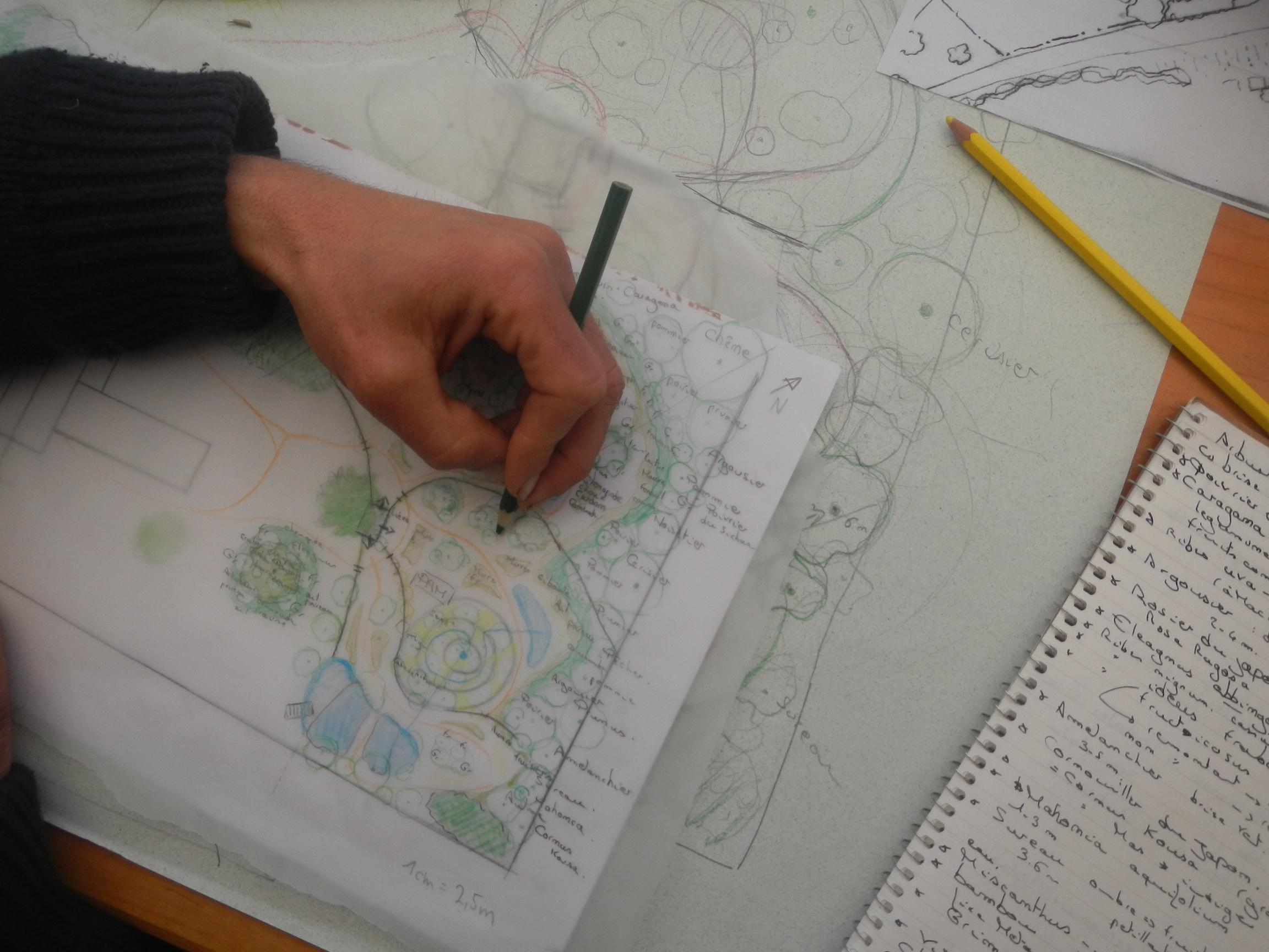 Design de jardins forêt - Alveoles